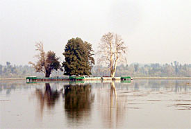 Char Chinar in the middle of Dal Lake