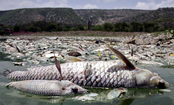 Dead fish washed up ashore Jaipur's Mansagar lake