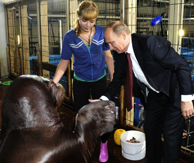 Russian President Vladimir Putin shakes hands with a walrus during his visit to the Primorsky Aquarium, which is under construction, on the Russky Island in the far eastern city of Vladivostok