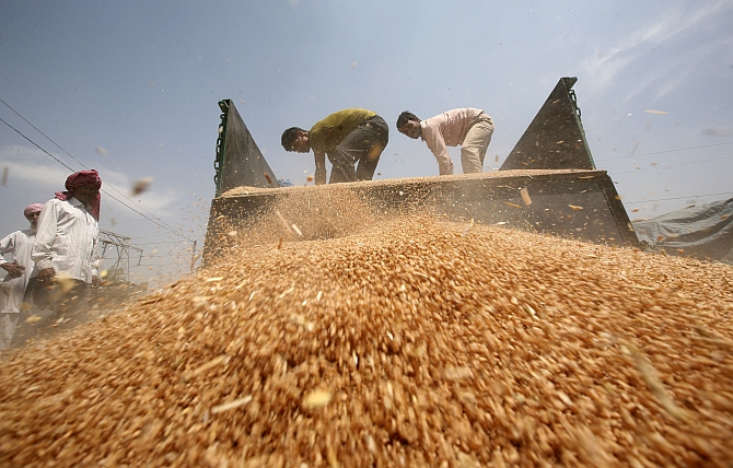 Labourers unload wheat from a tractor trolley at a wholesale grain market on the outskirts of Amritsar