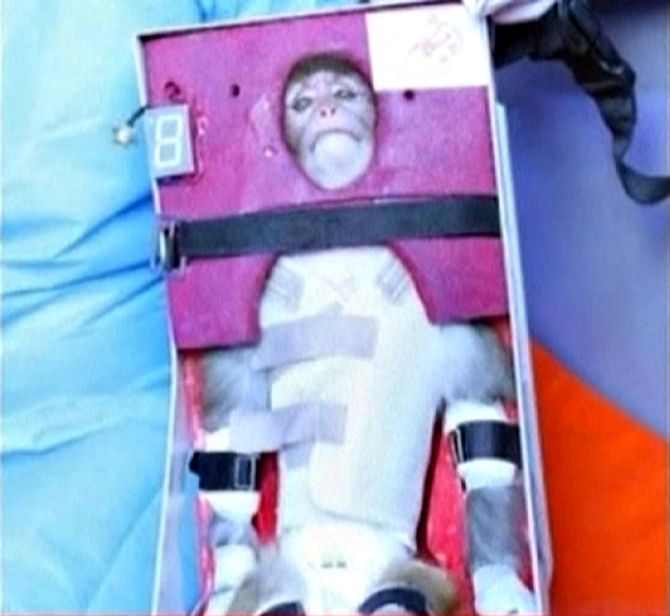 A still image from an undated video footage released by Iran's state-run English language Press TV shows a monkey that was launched into space.