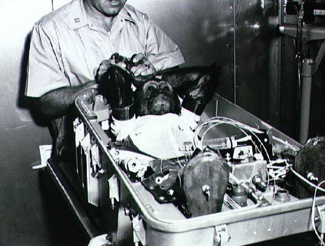 Enos the space chimp is wearing a space suit and lying in his flight couch while being prepared for insertion into the en:Mercury-Atlas 5 capsule in 1961