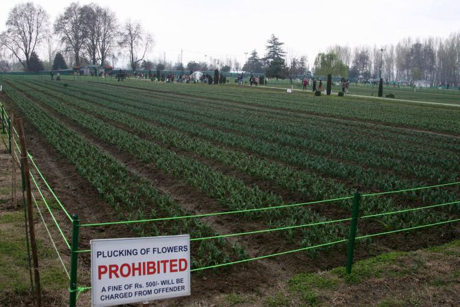 PHOTOS: Kashmir's tulip garden a bit 'under the weather'
