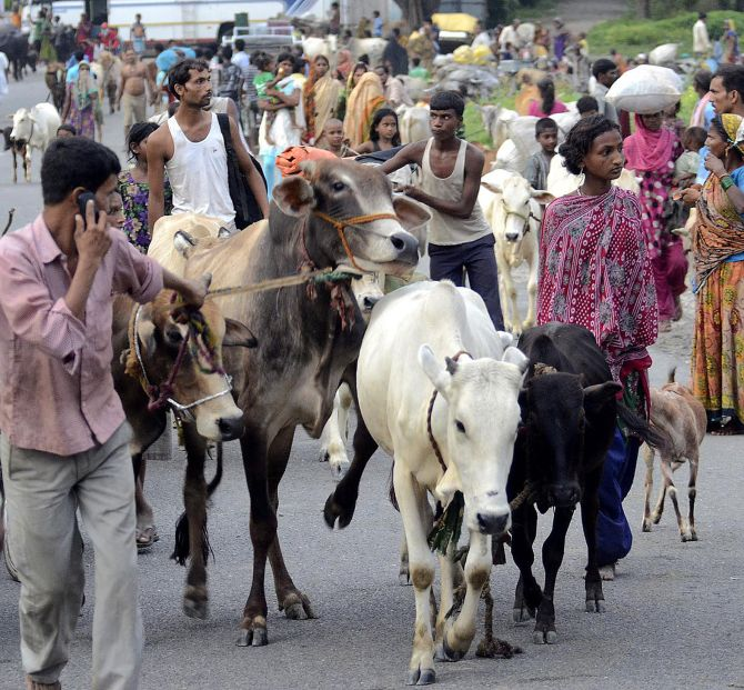 Villagers move with their belongings and cattle to relief camps at Supaul district, Bihar.