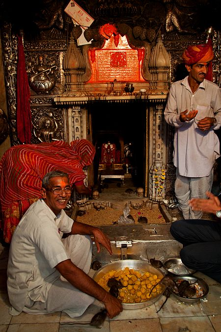 While rats eat prasad, priests smile at Karni Mata temple