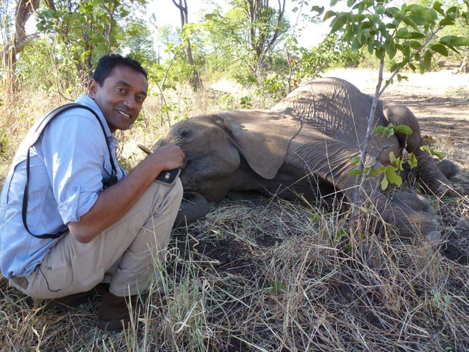 M Sanjayan poses with a sleeping elephant during a hike in Africa.