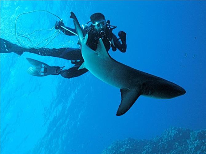 Trailing a shark in the Coral Sea, Australia.
