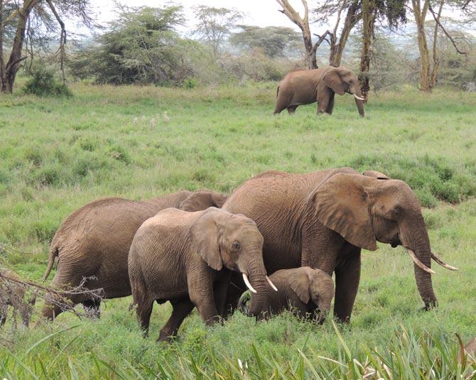 Elephants in northern Kenya.