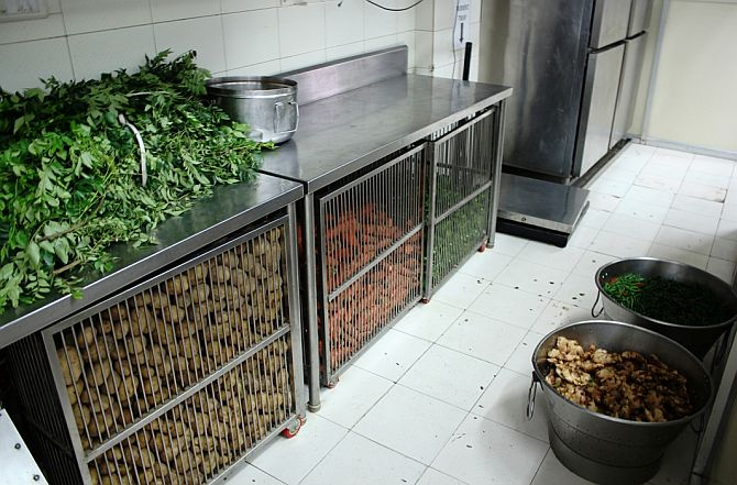 Kitchen is spotlessly clean and has a separate section for storing vegetables. It also has a cold storage.
