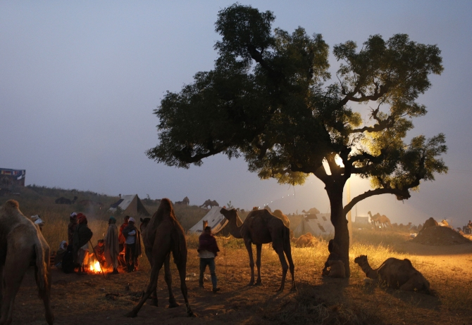 A group of camel traders warms themselves by a fire near a herd of camels early morning at the Pushkar Fair in Rajasthan.