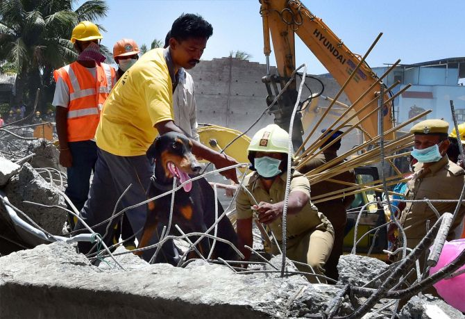 Sniffer dogs were used by NDRF official to find survivors in the rubble