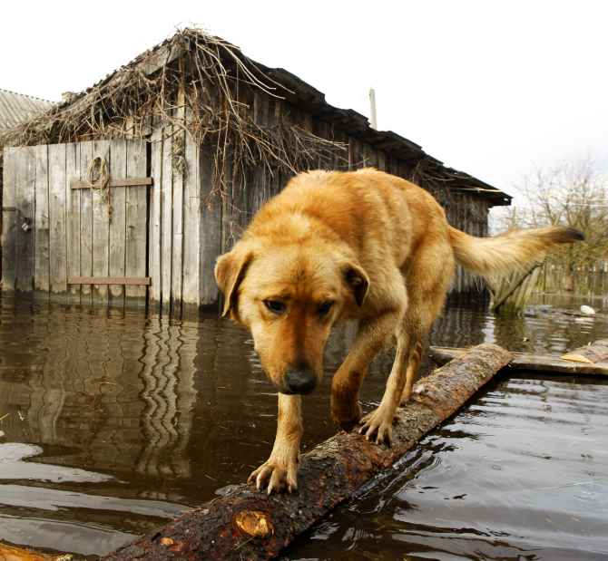 India News - Latest World & Political News - Current News Headlines in India - Photos: Animals caught in the fury of floods