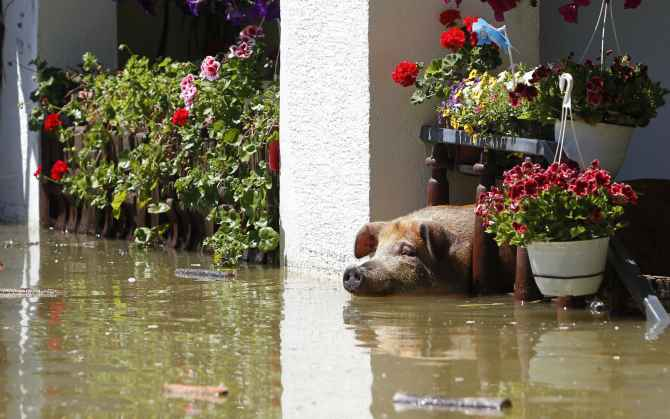 Photos: Animals caught in the fury of floods