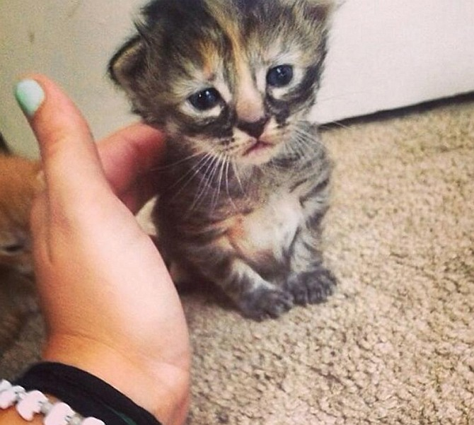 This cat is 'purr'manently sad!