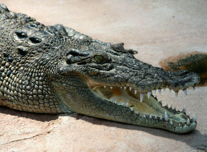 Mexican mayor marries crocodile