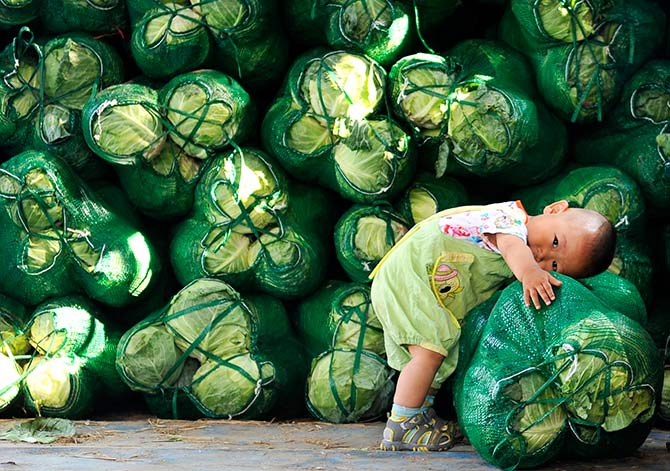 A boy leans on a sack of cabbages at a vegetable wholesale market in Jinan, Shandong province July 13, 2014. China's leaders are expecting to see a dividend from three months of stimulus spending in second-quarter growth data on July 16, 2014