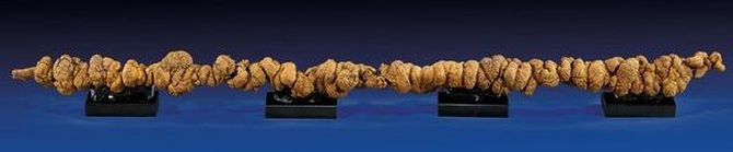 World's longest dinosaur poo is on sale