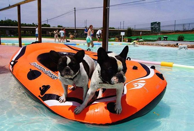First swimming pool just for canines opens in Spain