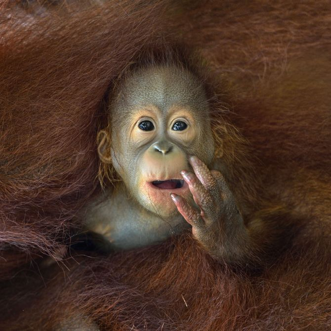 National Award, 1st place in Singapore: 'What are you staring at?' by Chin Boon Leng