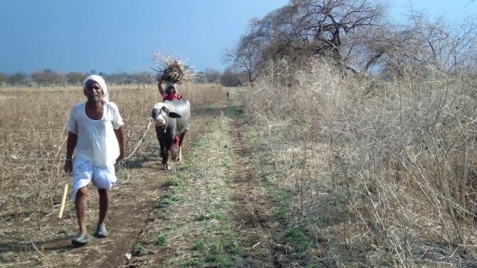A farmer walks along his destroyed crops