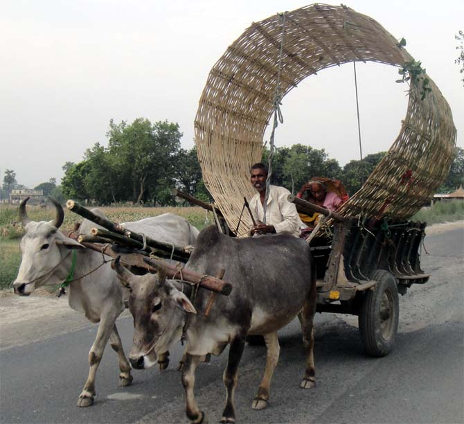 A bullock cart carries a bamboo container used to store wheat on the road to Gandaman.