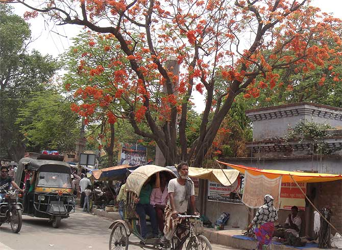 The heart of Chhapra town, the district headquarter of Saran, where the RJD's Rabri Devi is fighting the BJP's Rajiv Pratap Rudy.