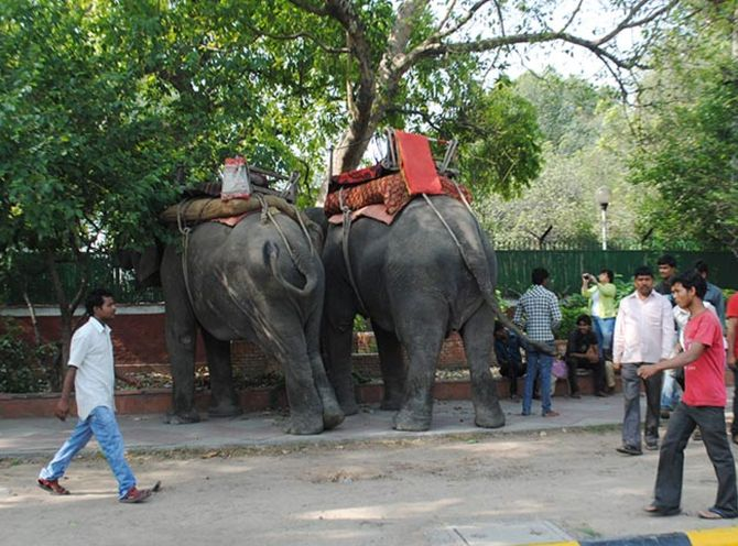 The elephants that have been brought, in case Modi arrives at the BJP headquarters.