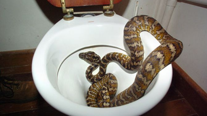 The snake was found in the woman's master bathroom.