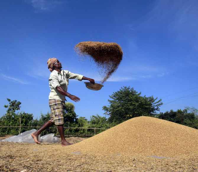 A farmer winnows paddy crops at a field on the outskirts of Agartala in Tripura