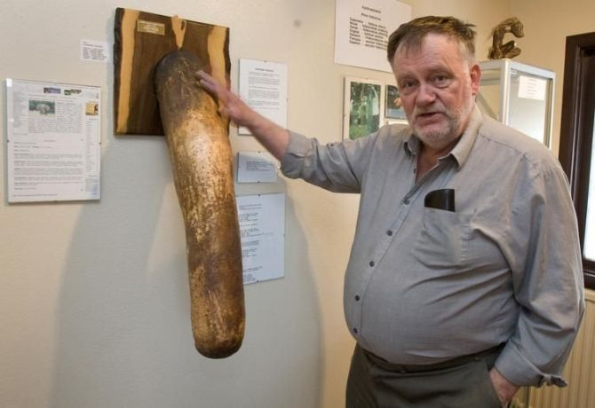 Sigurdur Hjartarson, owner and founder of the Icelandic Phallological Museum, poses next to a stuffed elephant penis at the museum.