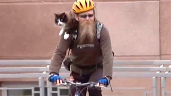Fat cat loses weight by cycling