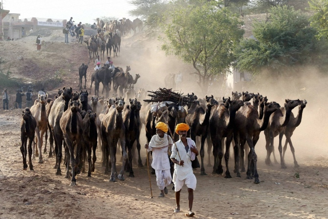 India News - Latest World & Political News - Current News Headlines in India - PICS: World's LARGEST camel fair starts in Pushkar