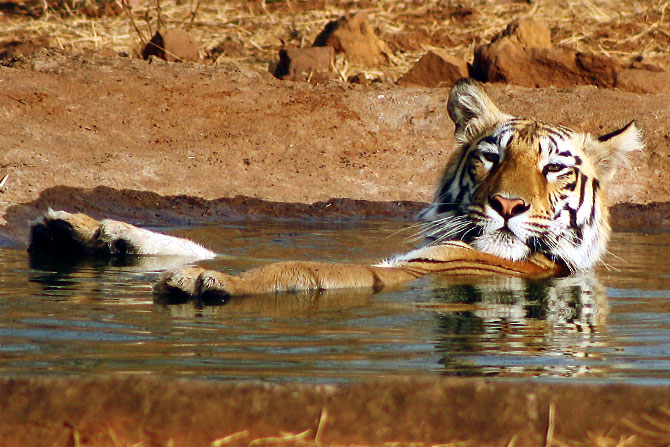 A scene from the Tadoba National Park in Maharashtra. Photograph: Sonil Dedhia/Rediff.com