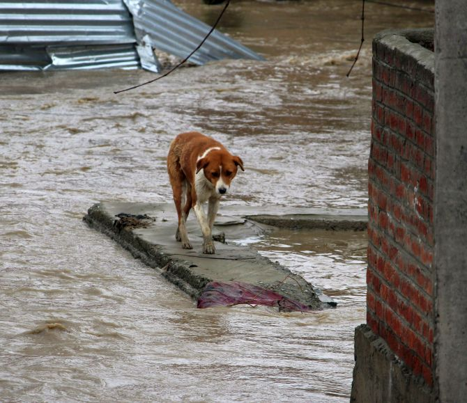 India News - Latest World & Political News - Current News Headlines in India - J & K bracing for fresh spell of rains; flood toll 17