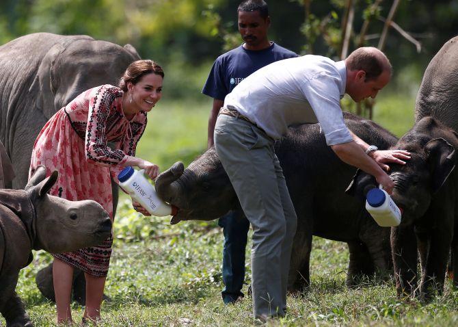 India News - Latest World & Political News - Current News Headlines in India - PHOTOS: Royals in the jungle: Will and Kate@Kaziranga