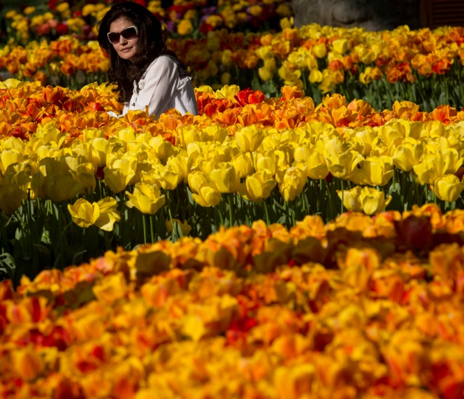 India News - Latest World & Political News - Current News Headlines in India - Sight to behold: 30 million tulips blossom in Istanbul!