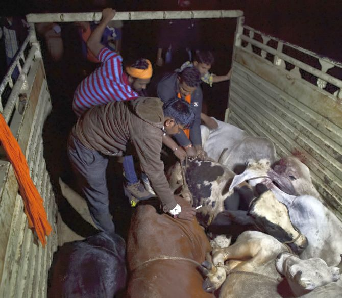 Members of a cow vigilante group unload cows at a rescue shelter in Rajasthan