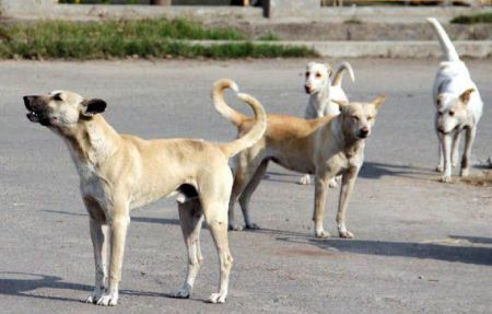 keralas decision to kill dangerous dogs unlawful