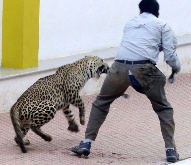 India News - Latest World & Political News - Current News Headlines in India - Spotted: Leopard strays into Bengaluru school on Sunday