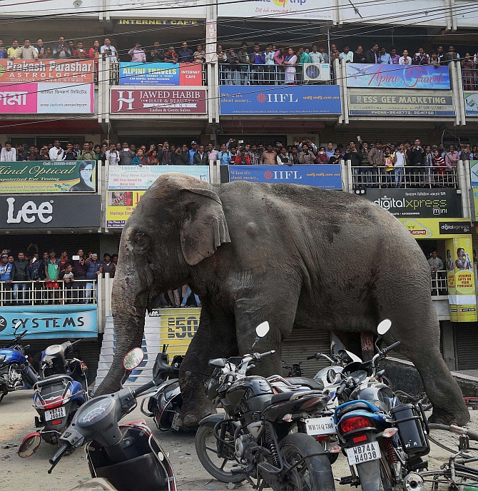 India News - Latest World & Political News - Current News Headlines in India - Elephant goes on a rampage in West Bengal