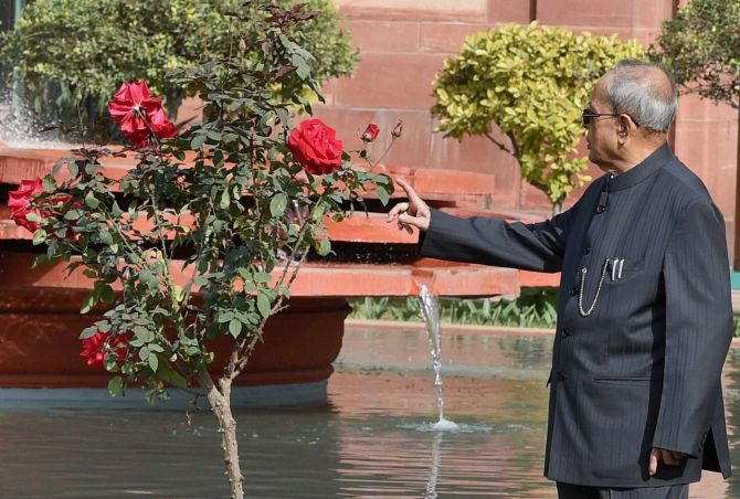 India News - Latest World & Political News - Current News Headlines in India - PHOTOS: Welcome to the President's majestic Mughal Garden