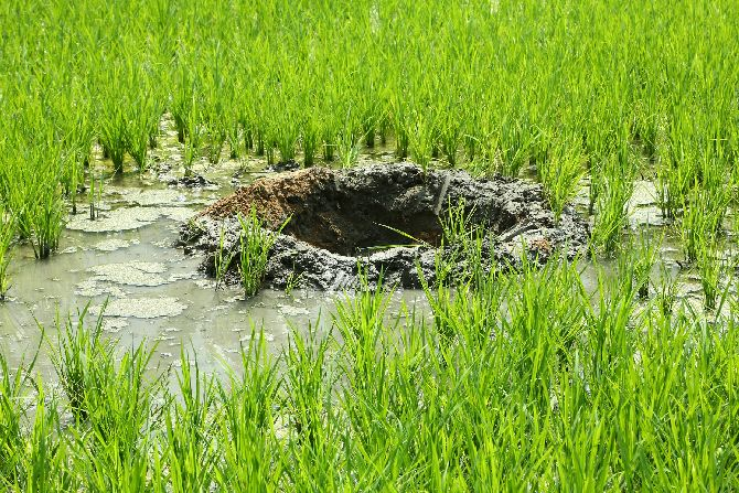 Crater in the paddy field