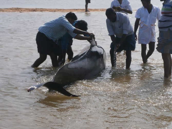 Firshermen try to push a whale back into the sea