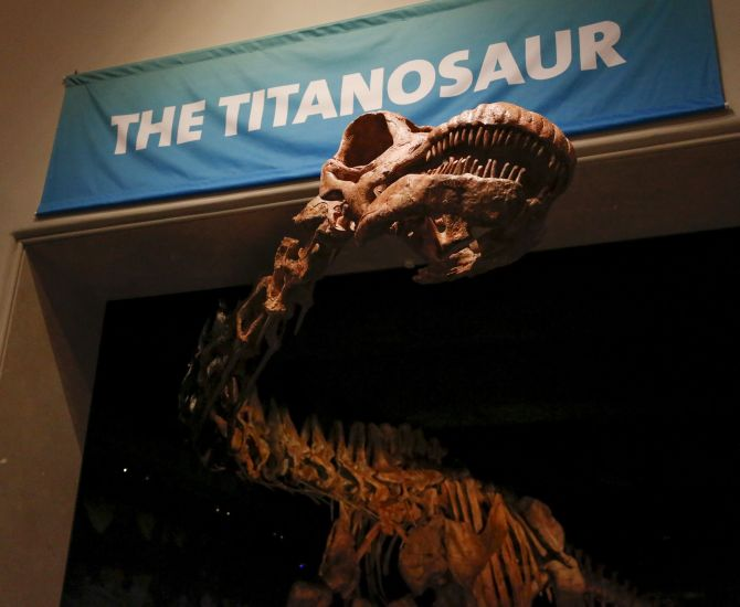 India News - Latest World & Political News - Current News Headlines in India - PHOTOS: 122-foot long Titanosaur 'invades' New York
