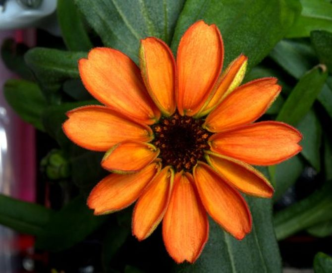 India News - Latest World & Political News - Current News Headlines in India - PHOTOS: Check out the first flower grown in space!