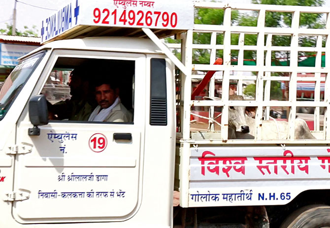 The Ambulance for cows