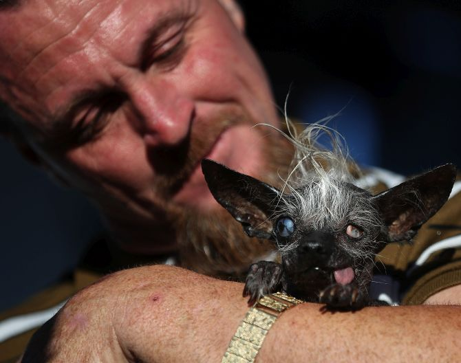 India News - Latest World & Political News - Current News Headlines in India - Meet Sweepee Rambo -- the world's ugliest dog