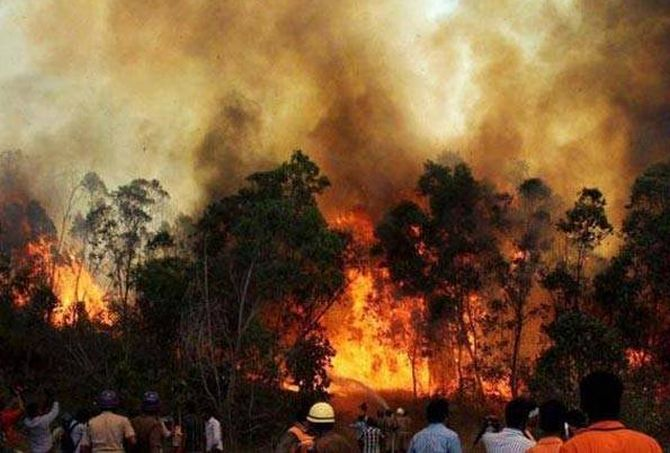 India News - Latest World & Political News - Current News Headlines in India - Did the timber mafia cause the forest fires?