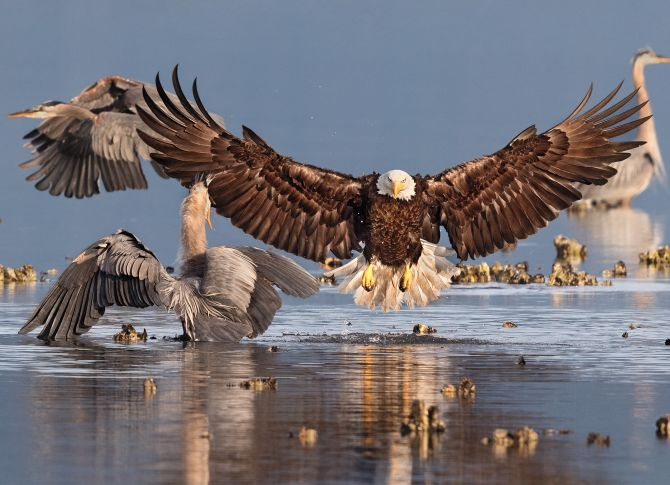 India News - Latest World & Political News - Current News Headlines in India - PHOTOS: Birds like you have never seen before