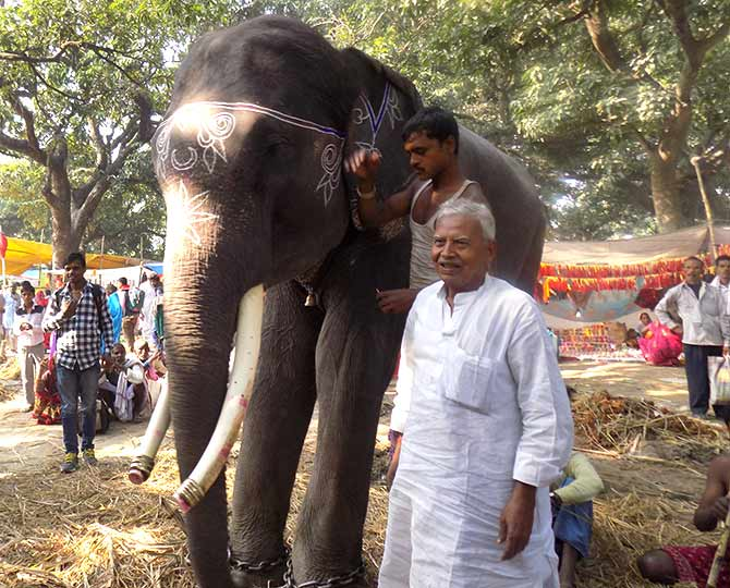Brajnandan Singh brought his elephant, Babusaheb, to the Sonepur fair.